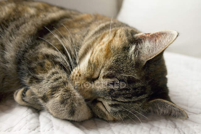 Close-up of sleeping cat, selective focus — Stock Photo