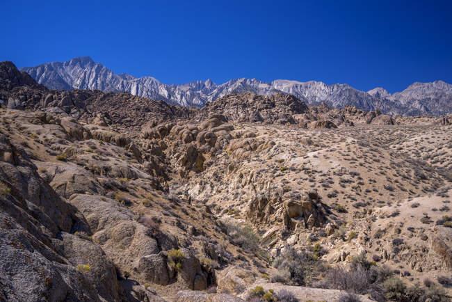 Пустельний краєвид самотній сосни, Алабама Hills, Каліфорнія, США — стокове фото