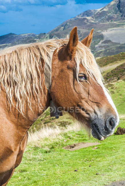 Großes Arbeitspferd gegen Berge, selektiver Fokus — Stockfoto