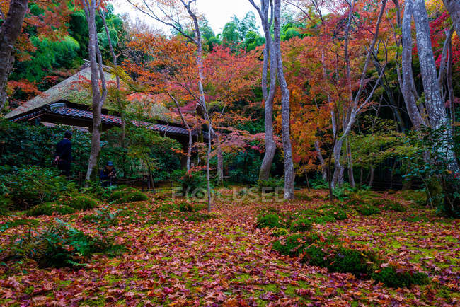 Scenic view of Gioji temple, Kyoto, Kansai, Honshu, Japan — Stock Photo