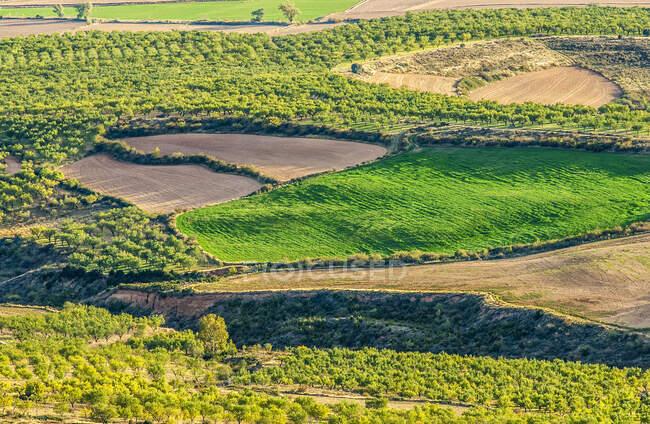 Испания, община Арагон, провинция Уэска, культурная равнина Лоарре — стоковое фото