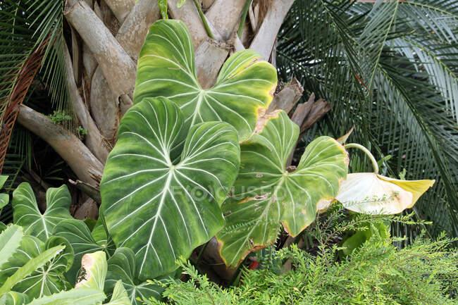 USA. Florida. Vegetation in Everglades National Park. — Stock Photo