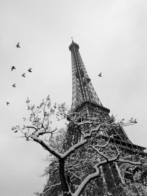 France, Paris, 16th arrondissement, flock of birds on the Eiffel tower and trees enneigs / Birds flying around snow covered trees and Eiffel tower, 16th arrondissement, Paris, France — Stockfoto