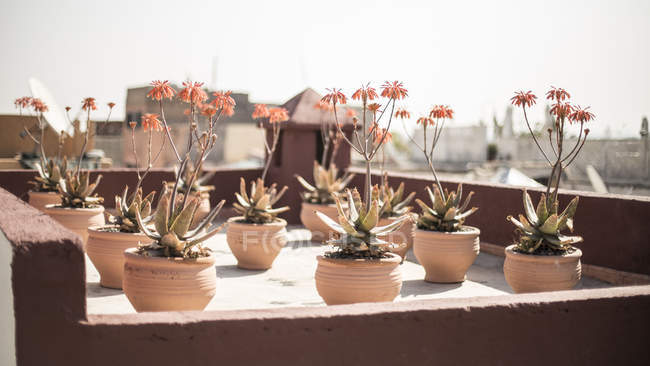 Flowerpots on roof terrace, Marrakesh, Morocco — Stock Photo