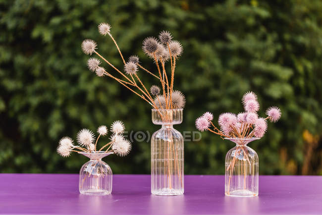 Table decoration with glass vases and coloured globe thistles — Stock Photo