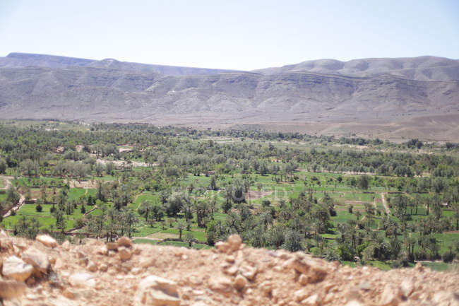 Vegetation in hilly landscape of Wadi Draa, Agdz, Morocco — Stock Photo