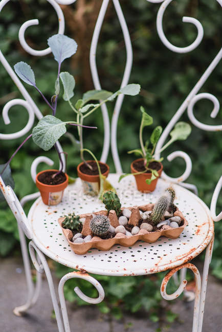 Potted succulents in egg carton on metal chair — Stock Photo