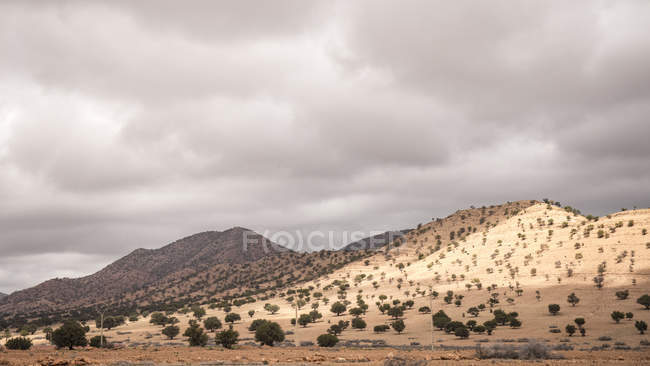 Arid landscape and green vegetation in Agdz, Taliouine, Morocco — Stock Photo
