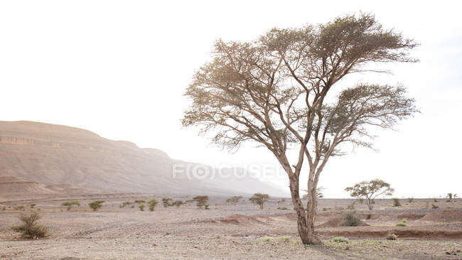 Barren vegetation in desert by Tamegroute, Zagora, Morocco — Stock Photo