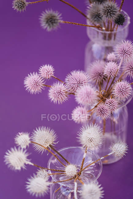 Table decoration with glass vases filled with globe thistles. — Stock Photo