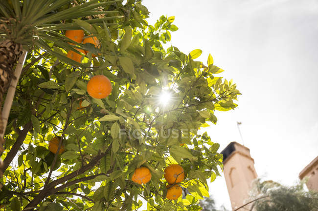Orange tree and palm tree with buildings against sky — Stock Photo