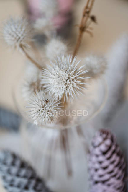 Autumnal decoration with thistles in glass vase — Stock Photo