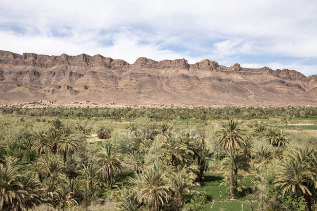 Palm grove and mountains by Tizi-n-Tinififft, Morocco — Stock Photo
