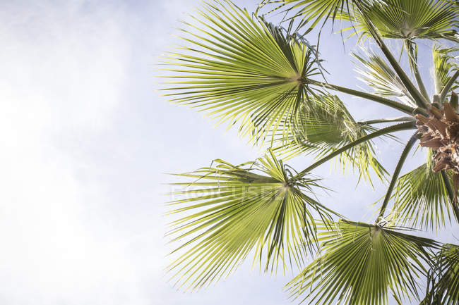 Low angle view of leaves on palm tree — Stock Photo