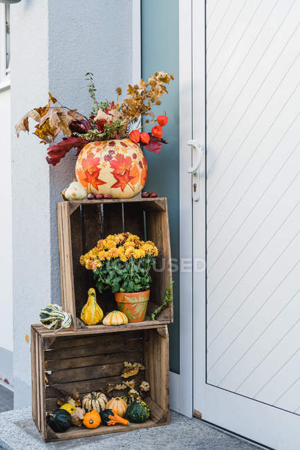 Entrance autumnal decoration with pumpkins and growing wild chrysanthemum flowers in wooden boxes — Stock Photo
