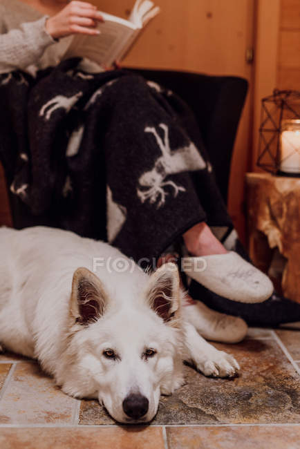 Cropped view of woman wrapped in blanket reading book with shepherd dog lying on floor — Stock Photo