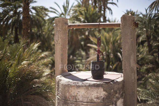 Palm grove and draw well in Agdz, Morocco — Stock Photo