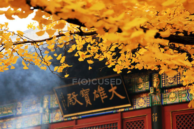 Autumnal foliage at Hongluo temple in China, Asia — Stock Photo