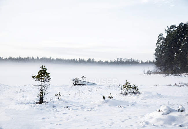 Winter scene of landscape with frozen lake in forest — Stock Photo