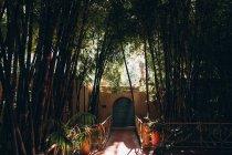 Portas fechadas e caminho entre plantas de bambu no dia ensolarado em Marrocos, África — Fotografia de Stock
