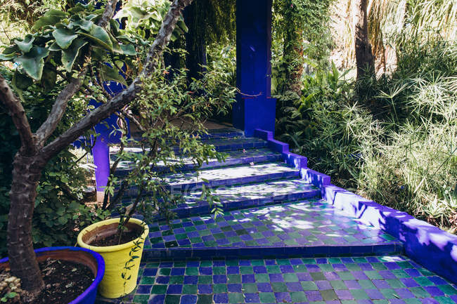 Beautiful blue stairs and plants in flower pots in garden in Morocco, Africa — Stock Photo