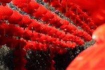 Vista de ángulo bajo de linternas colgantes rojas festivas decorativas - foto de stock