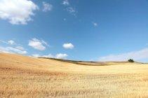Beau paysage avec champ de blé à pingdingshan, xinjiang, Chine — Photo de stock