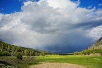 Paysage étonnant avec la végétation verte et le ciel nuageux dans le parc national de Yellowstone, Etats-Unis — Photo de stock