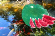 Fresh sliced watermelon and goldfish swimming in pond with calm water — Stock Photo