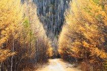Bellissimo paesaggio con Grande catena montuosa Khingan in autunno, provincia di Heilongjiang, Cina — Foto stock