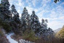 Красивий пейзаж Янга гір у провінції Хунань, Китай — стокове фото