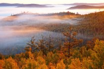 Amazing autumn forest in Greater Khingan Range, Heilongjiang Province, China — Stock Photo