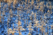 Beautiful Winter Landscape in Heilongjiang province, Greater Khingan Range, China — Stock Photo