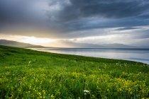 Collines verdoyantes avec de belles fleurs en fleurs et plan d'eau pendant le coucher du soleil — Photo de stock