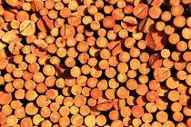 Acumulación de madera en la finca forestal de la Gran Cordillera Khingan, China - foto de stock