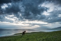 Beautiful landscape with cloudy sky and horse on green grass near body of water — стокове фото
