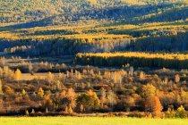 Beautiful Autumn Landscape at Greater Khingan Range, Heilongjiang Province, China — Stock Photo
