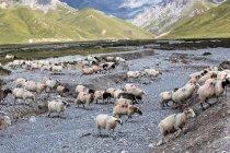 Beautiful landscape with Grassland scenery of Gangcha County, Qinghai Province, China — Stock Photo