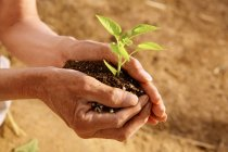 Tiro recortado de persona sosteniendo tierra con plántulas verdes - foto de stock