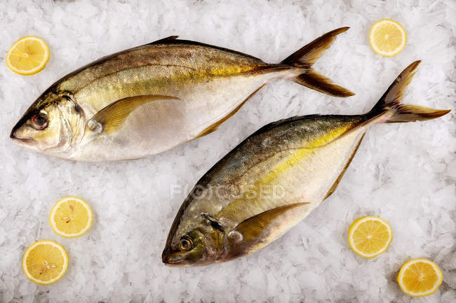 Top view of fish with lime slices on ice — Stock Photo