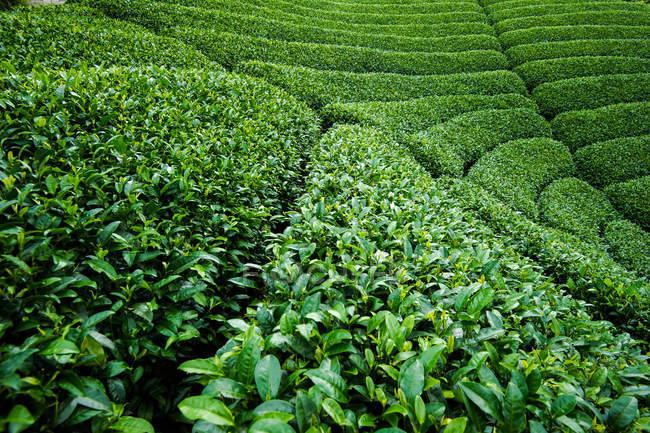 Vista full frame di una lussureggiante vegetazione verde nella giornata di sole — Foto stock