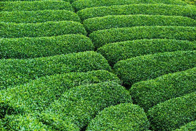 Full frame view of lush green vegetation at sunny day — Stock Photo