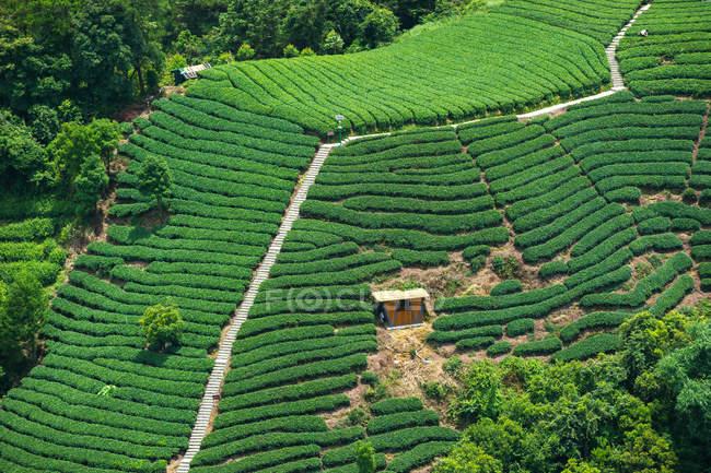 Высокий угол зрения пышной зеленой растительности на склоне холма — стоковое фото