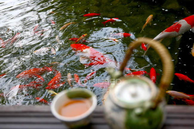 Selective focus of tea set and goldfish swimming in pond — Stock Photo