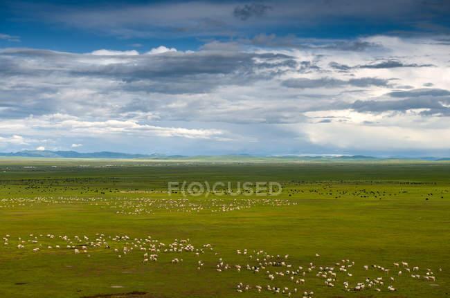 Paysage de prairie de Gannan dans la province de Gansu, Chine — Photo de stock