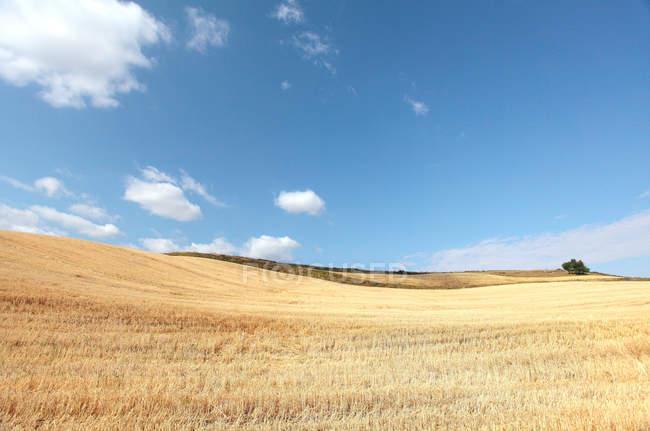 Beautiful landscape with wheat field in pingdingshan, xinjiang, china — Stock Photo