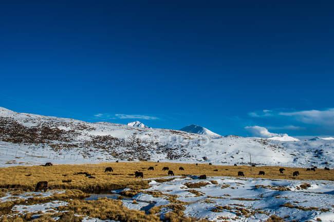 Paysage étonnant avec des montagnes enneigées au Tibet — Photo de stock