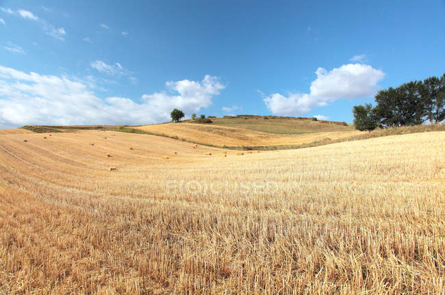 Beautiful landscape with wheat field in pingdingshan, xinjiang, china — Stock Photo