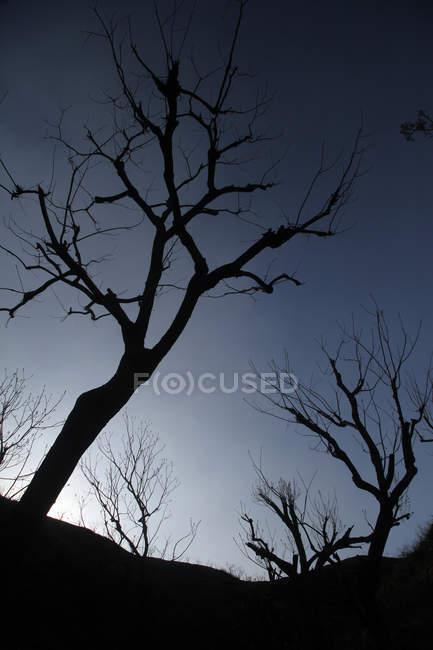 Низкий угол обзора темных силуэтов деревьев на фоне неба — стоковое фото