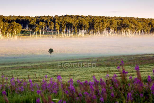 Beau paysage à Arxan, Mongolie intérieure, Chine — Photo de stock